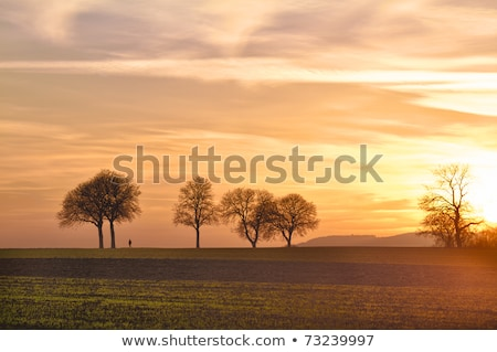 Cornfield with blue skies in Pfalz, Germany Stock photo © fisfra