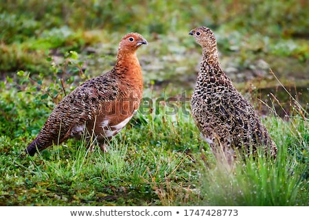 birds spouses Stock photo © adrenalina