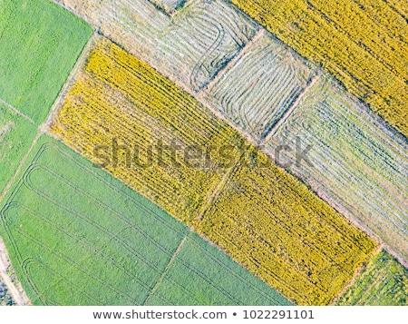 Megművelt mező ipari marihuána növekedés természet Stock fotó © stevanovicigor