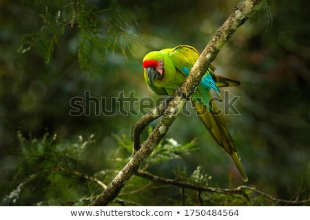 A bird at the branch of a tree Stock photo © bluering