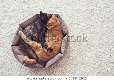 cats couple in love Stock photo © adrenalina
