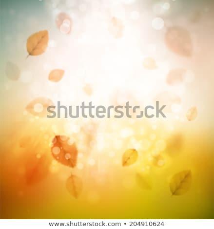 beautiful autumn background with sun eps 10 stock photo © beholdereye