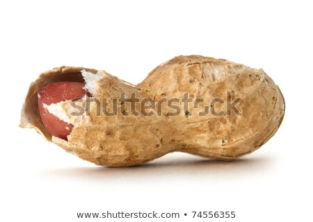 Amendoins abrir concha branco fresco Foto stock © Digifoodstock