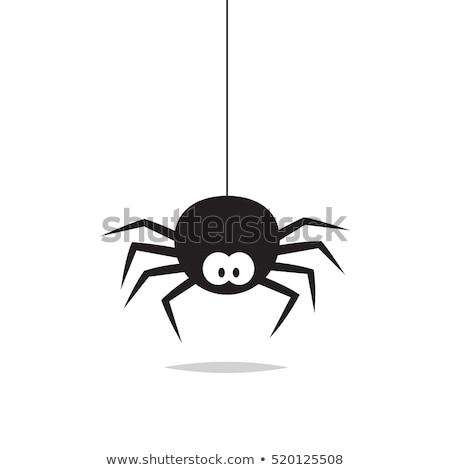 Araignée suspendu web insectes été nature Photo stock © Olena