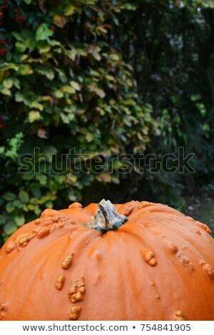 Laranja abóbora verde ação de graças halloween Foto stock © sarahdoow