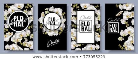 establecer · banners · hojas · verdes · flores · negocios · flor - foto stock © purplebird