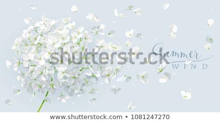 Nyár szél vektor rajz fényűző fehér Stock fotó © LisaShu