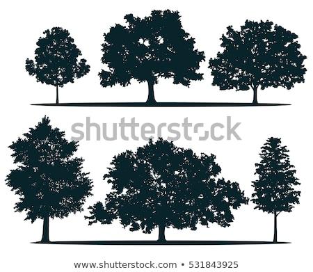 изолированный · тополь · дерево · белый · древесины · зеленый - Сток-фото © foka