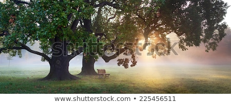 View under an old tree stock photo © hraska