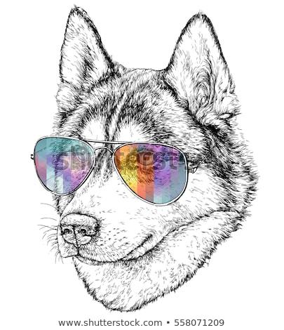 Сток-фото: Cartoon · волка · Солнцезащитные · очки · иллюстрация · собака