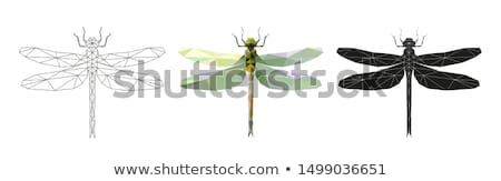 Polygonal dragonfly Stock photo © blackmoon979