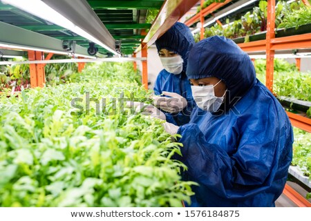 Young researcher selecting seedlings of new sorts of horticultural plants Stock photo © pressmaster