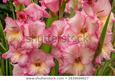 köteg · virágok · napos · megvilágított · színes · kék · ég - stock fotó © restyler