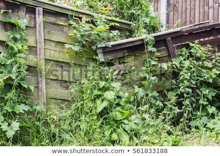 Ogród mglisty okno drzewo huśtawka wypoczynku Zdjęcia stock © trgowanlock
