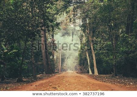 道路 ジャングル 美しい ツリー 木材 森林 ストックフォト © borna_mir