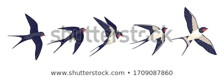vector silhouette of the swallow on white background Stock photo © basel101658