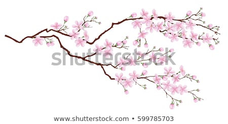 Cherry branches with spring flowers stock photo © mahout