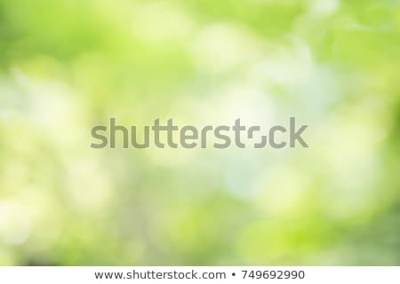 自然 緑の木 草原 白 スペース 文字 ストックフォト © ElaK