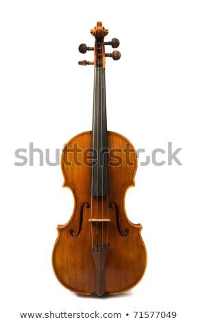 preto · velho · violino · tulipas · branco · flores - foto stock © oksix