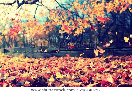 Branch of colorful autumn leaves Stock photo © Arrxxx