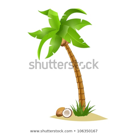 Vector illustration of the palm trees width coconuts. Stock photo © articular