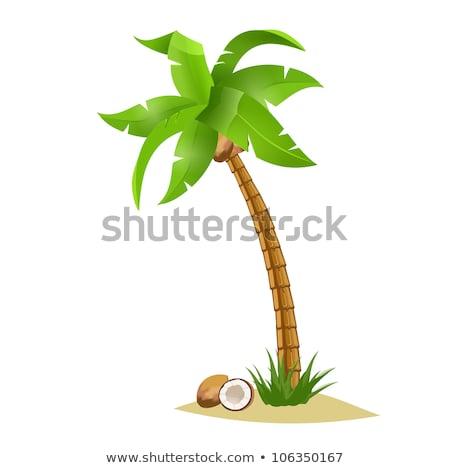 ストックフォト: Vector Illustration Of The Palm Trees Width Coconuts