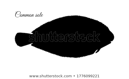 Silhouette of sole fish stock photo © perysty