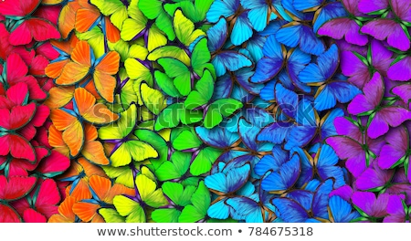 tropical · borboleta · natureza · verde · cor · branco - foto stock © macropixel
