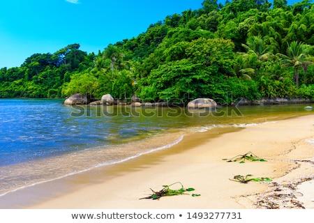 楽園 · ビーチ · サンパウロ · ブラジル - ストックフォト © swimnews