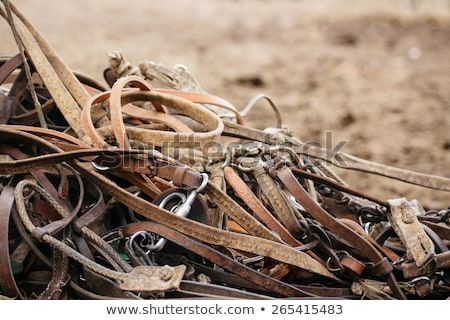 Details of diversity used horse reins Stock photo © vladacanon