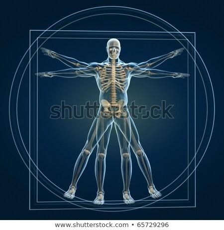 uomo · 3D · scheletro · alto · qualità - foto d'archivio © elenarts