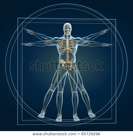Vitruvian human - 3D render Stock photo © Elenarts