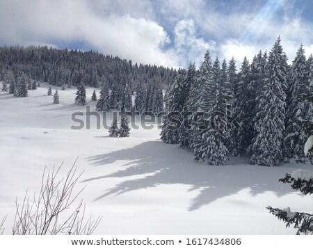 árvore sombras neve inverno dia floresta Foto stock © rglinsky77