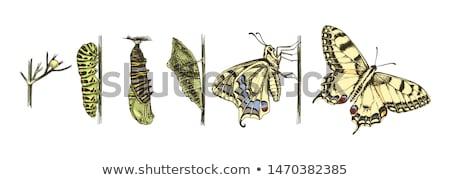 verde · lagarta · borboleta · macro - foto stock © nejron