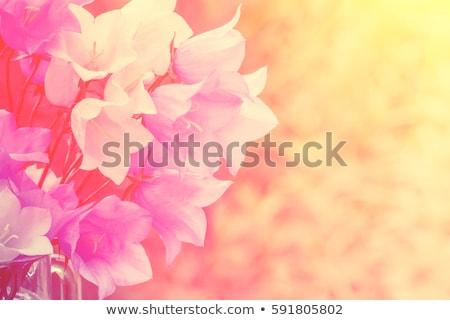 azul · flor · perfil · raso · foco · natureza - foto stock © sarahdoow
