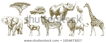 sketch giraffe elephant rhino vector background stock photo © kali
