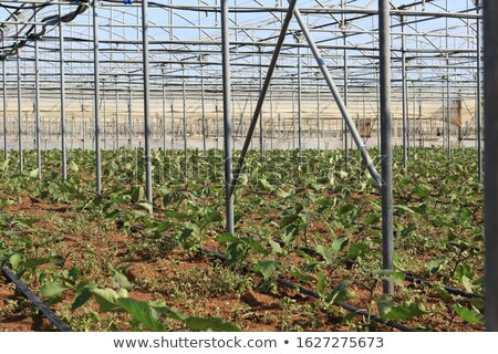 large irrigation systems arable crops  Stock photo © OleksandrO