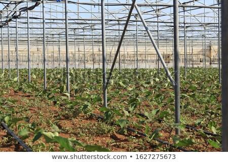 Nagy öntözés termés nyár nap fű Stock fotó © OleksandrO