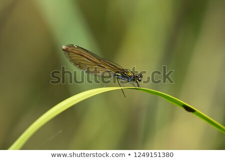 zöld · levél · sétapálca · természet · nyár · zöld · növény - stock fotó © alessandrozocc