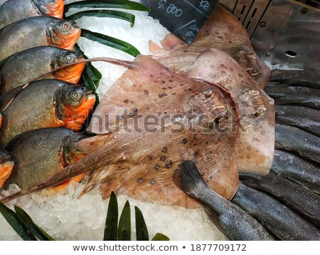 fresco · peixe · gelo · venda · frutos · do · mar · mercado - foto stock © hd_premium_shots
