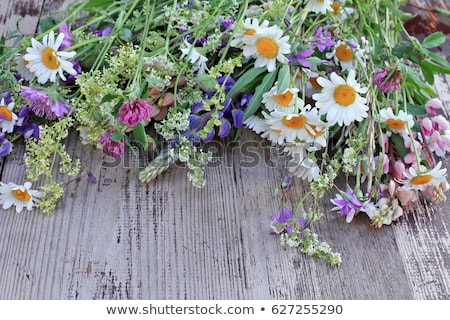 Bright colorful bouquet of wild flowers stock photo © alinbrotea