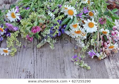 lumineuses · coloré · bouquet · fleurs · sauvages · fleur · feuille - photo stock © alinbrotea