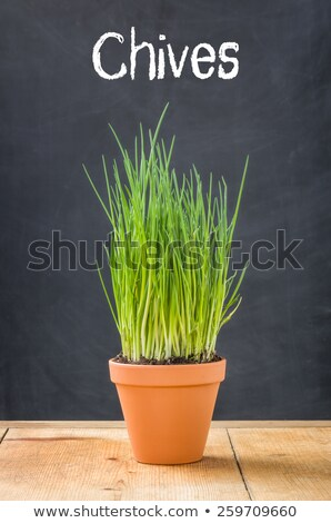 chives in a clay pot on a dark background stock photo © zerbor