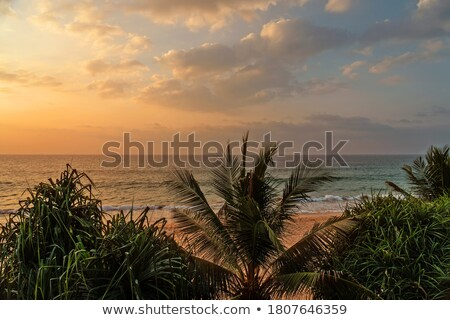 tropical sea sunset and palms Stock photo © Mikko