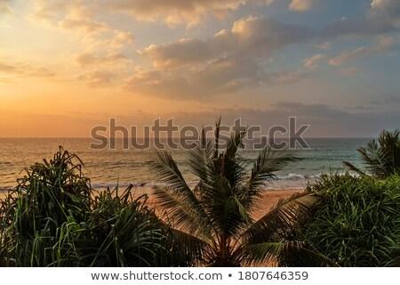 тропические морем закат ладонями красивой пейзаж Сток-фото © Mikko