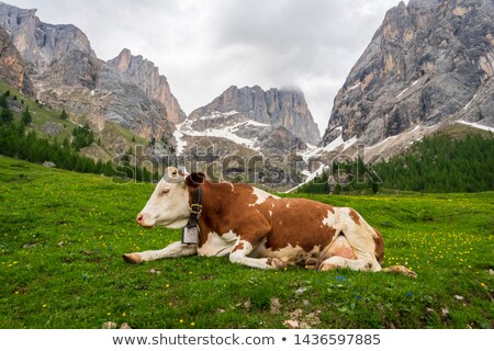 Cow on a mountain pasture Stock photo © ivz
