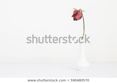 Faded rose on table Stock photo © Valeriy