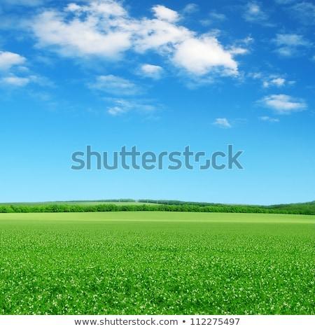 Zöld fű mező kék ég felhők horizont égbolt Stock fotó © karandaev