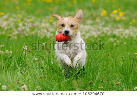 little girl with a toy dog in park Stock photo © Paha_L