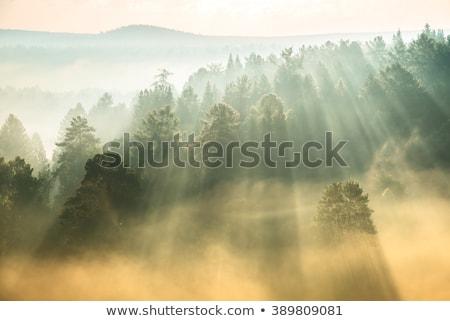 Autumn landscape with beautiful phenomenon in fog Stock photo © Kotenko